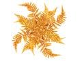 Golden Leaves Decoration