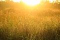 Zlatý světlo lesklý dole na tráva