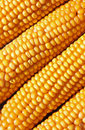Golden maize cob natural food background Royalty Free Stock Photo