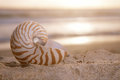 Golden nautilus shell on beach sunrise and tropical sea shallow dof Stock Images