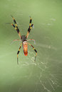 Golden orb spider female from brazos bend texas Stock Photos