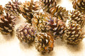 Golden painted pine cones Royalty Free Stock Photo