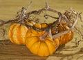 Golden Pumpkin Trio Royalty Free Stock Photo