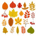 Golden and red autumn leaves, brunches and berries. Fall leaf vector cartoon collection isolated on white background