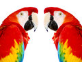 Golden Red Macaw Parrot Birds Royalty Free Stock Photos