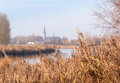 Golden reeds and a smal dutch village blurry old church in the background framed by swaying along the narrow river Stock Photo