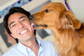 Golden retriever licking his owner face as sign affection Royalty Free Stock Photos