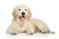 Golden Retriever puppy on white background Royalty Free Stock Photo