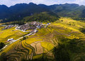 Golden rice fields in the mountain Royalty Free Stock Photo