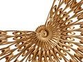 Golden rosette 3 Stock Photo