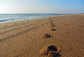 A Golden Sand Beach in The Outer Banks of North Carolina Royalty Free Stock Photo
