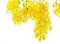 Golden shower tree and green leaf Stock Photography