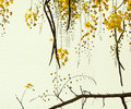 Golden Shower Tree on Handmade Paper Stock Photo