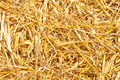 Golden straw texture Royalty Free Stock Photo