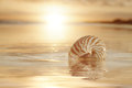 Golden sunrise and nautilus shell in the sea Royalty Free Stock Photo