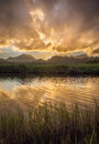 Golden sunset over a calm marsh Royalty Free Stock Photo