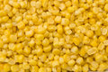 Golden sweetcorn grains Stock Photography
