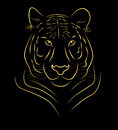 Golden tiger vector illustration of drawing Royalty Free Stock Photo