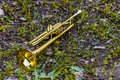 Golden trumpet placed on the grass after the concert Royalty Free Stock Photo