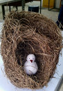 Golden weaver bird nest Royalty Free Stock Photo
