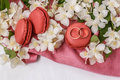 Golden wedding rings with flowers white Jasmine, macaroons and pink drape Royalty Free Stock Photo