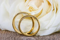 Golden wedding rings with white rose in the background Royalty Free Stock Photography