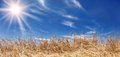 Golden Wheat Field Panorama With a Beautiful Sky Royalty Free Stock Photography