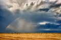 Golden wheat field with rainbow on the stormy sky Royalty Free Stock Photo