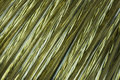 Golden wire coil Stock Image