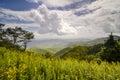 Goldenrod flowers landscape blue ridge parkway nc asheville north carolina Stock Images
