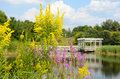 Goldenrod and Loosestrife closeup Houston Pond Cornell Royalty Free Stock Photo