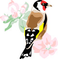 Goldfinch european with apple blossom Stock Image