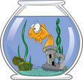 Goldfish in bowl Royalty Free Stock Photo