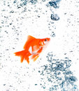 Goldfish with bubbles Stock Photo