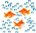 Goldfish with bubbles Royalty Free Stock Photos
