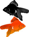 Goldfish carp isolated tropical aquarium Royalty Free Stock Images