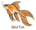 Goldfish, Color Illustration Royalty Free Stock Photo