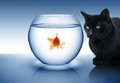 Goldfish in danger Royalty Free Stock Images