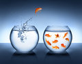 Goldfish jumping out of the water alliance concept Royalty Free Stock Images