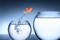 Goldfish jumping out of the water - team concept Royalty Free Stock Photo