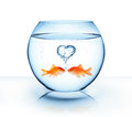Goldfish in love romantic concept Royalty Free Stock Photos