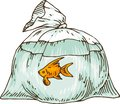 Goldfish in a Plastic Bag Royalty Free Stock Photo