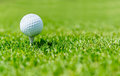 Golf ball on a beautiful green course Stock Photos