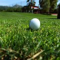 Golf ball on course close up Royalty Free Stock Photography