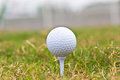 Golf ball on course close up Stock Photography