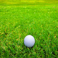 Golf ball on fairway Royalty Free Stock Photo