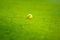 Golf ball on the golf course yellow Royalty Free Stock Images