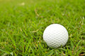 Golf ball on grass green course Stock Photos
