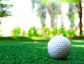 Golf Ball on the Green Grass Royalty Free Stock Images