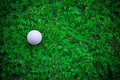 Golf ball on green grass Stock Image